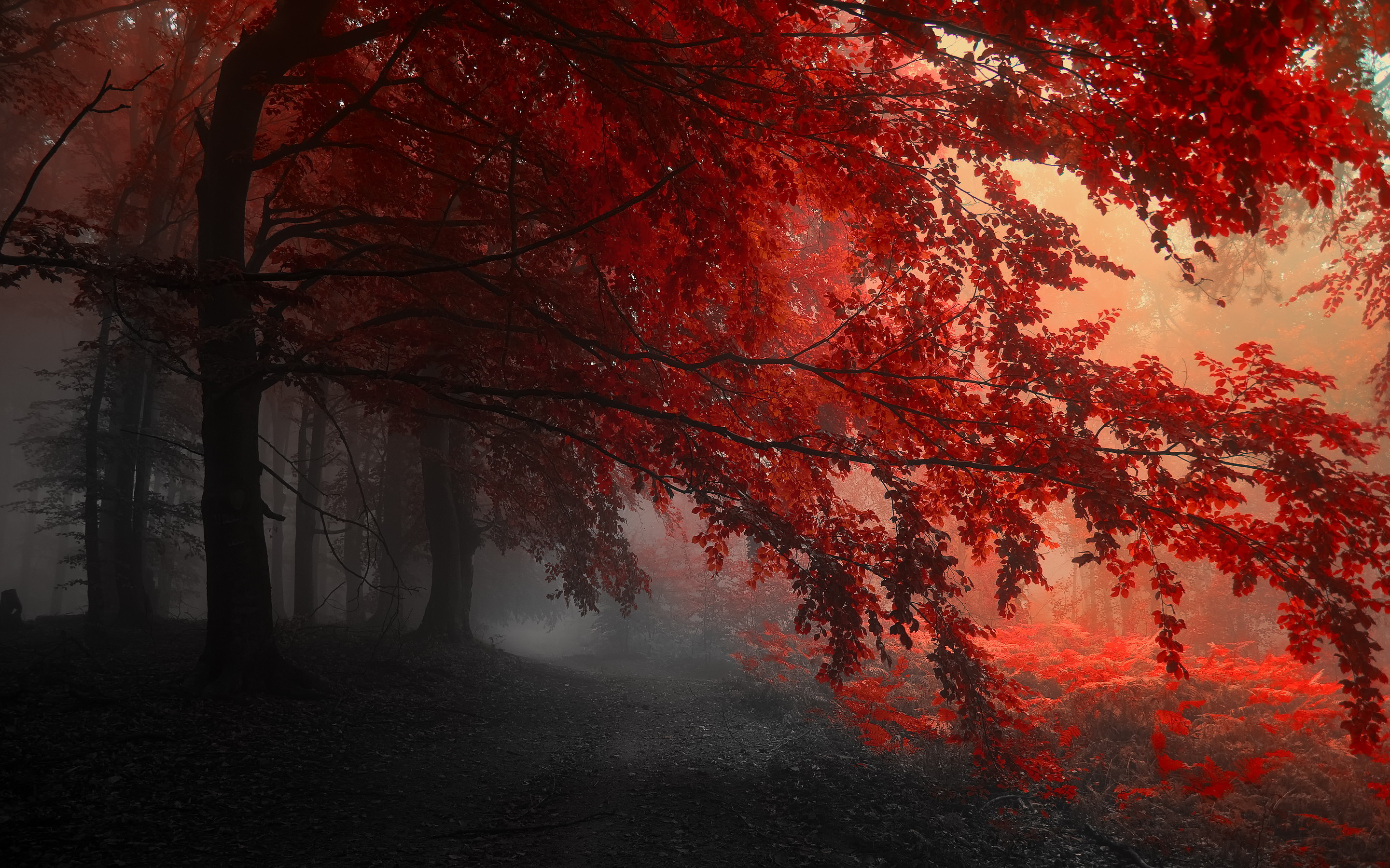 Red Forest Wallpaper 2880x1800 31559