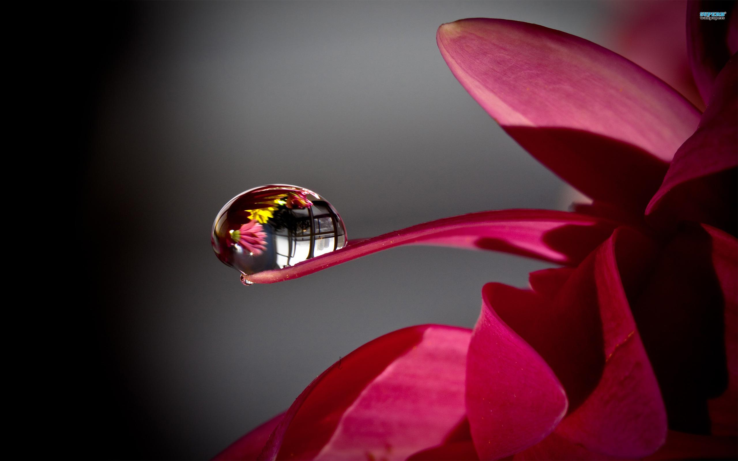 water flower s wallpaper