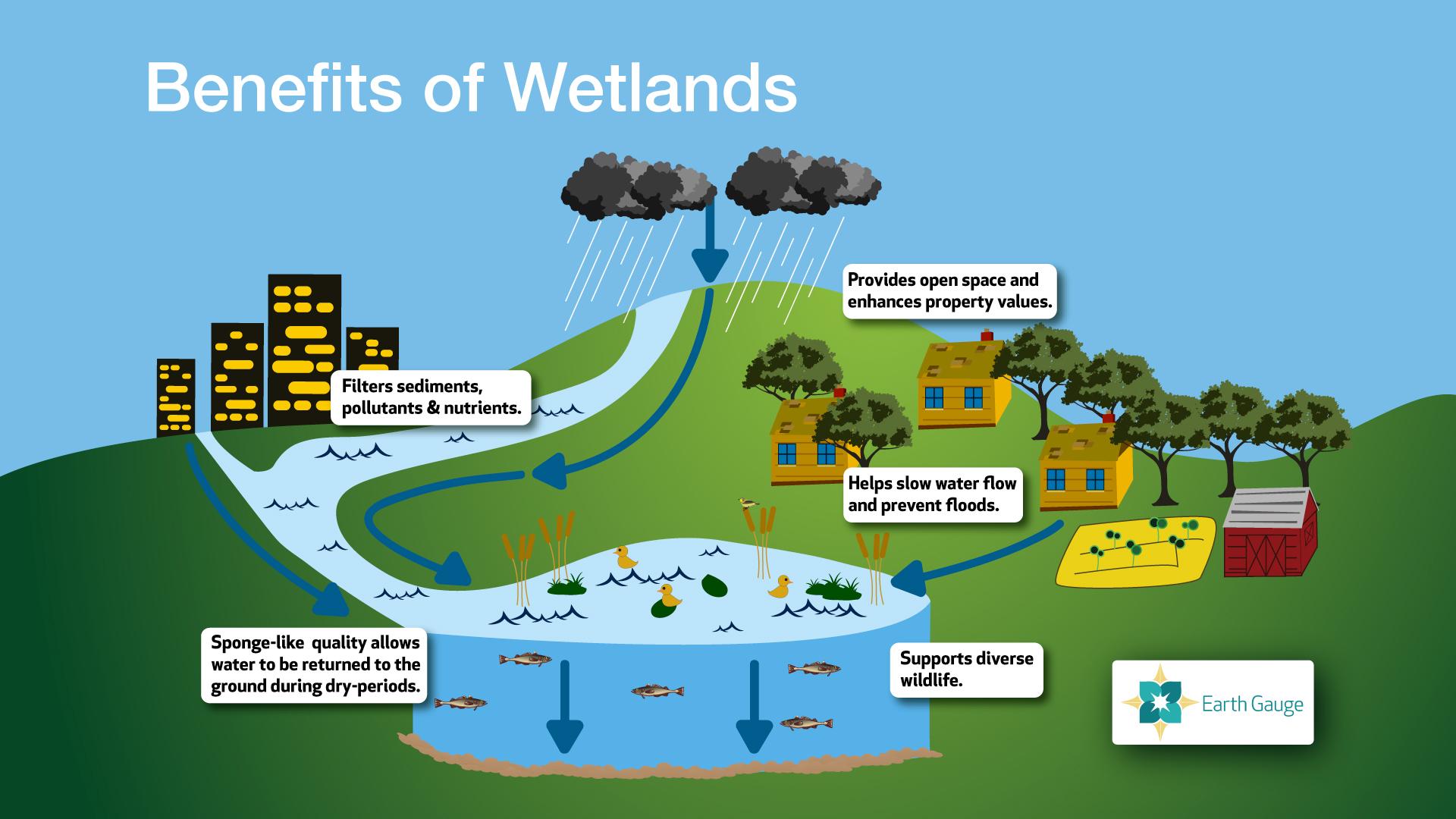 Wetlands Wallpaper