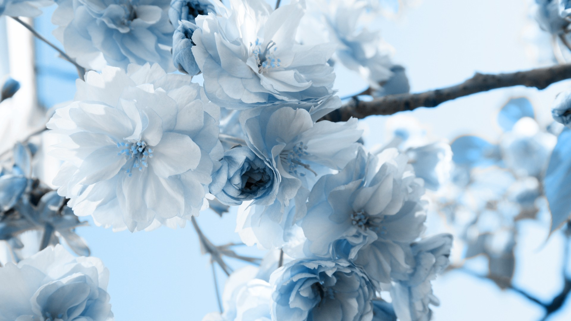 Image result for winter flowers