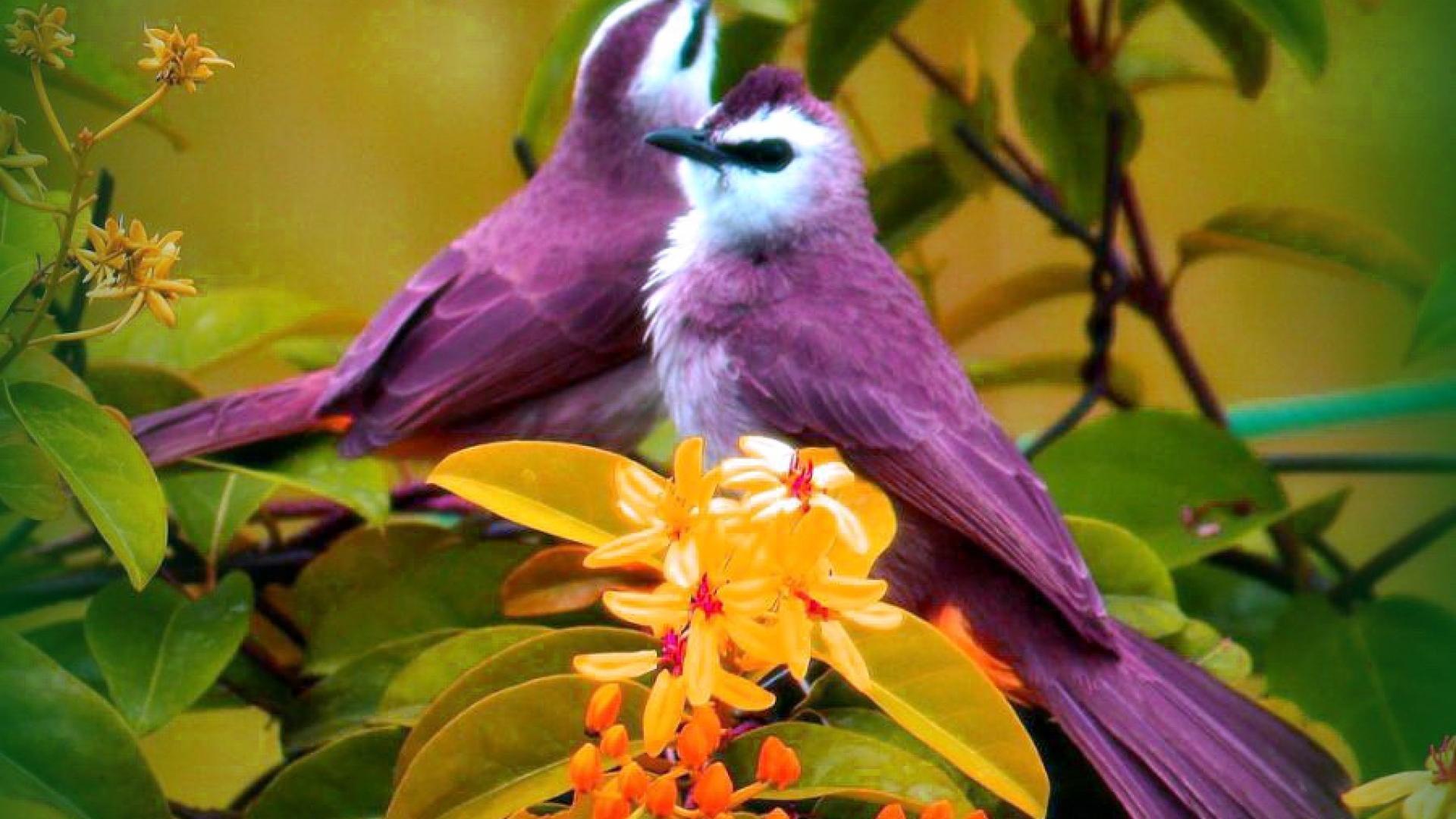 yellow bird on purple