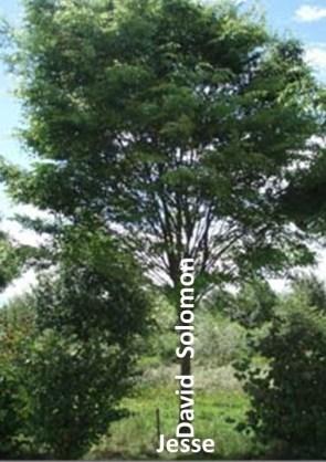 isaiah-tree