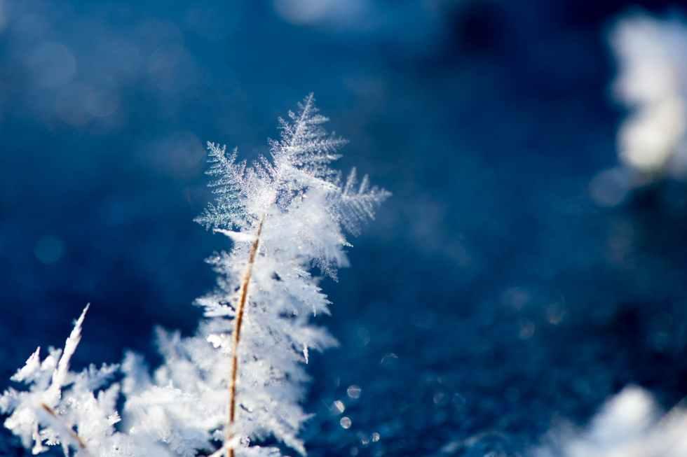 macro photography of snowflakes