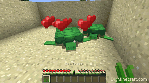 Turtles in Minecraft