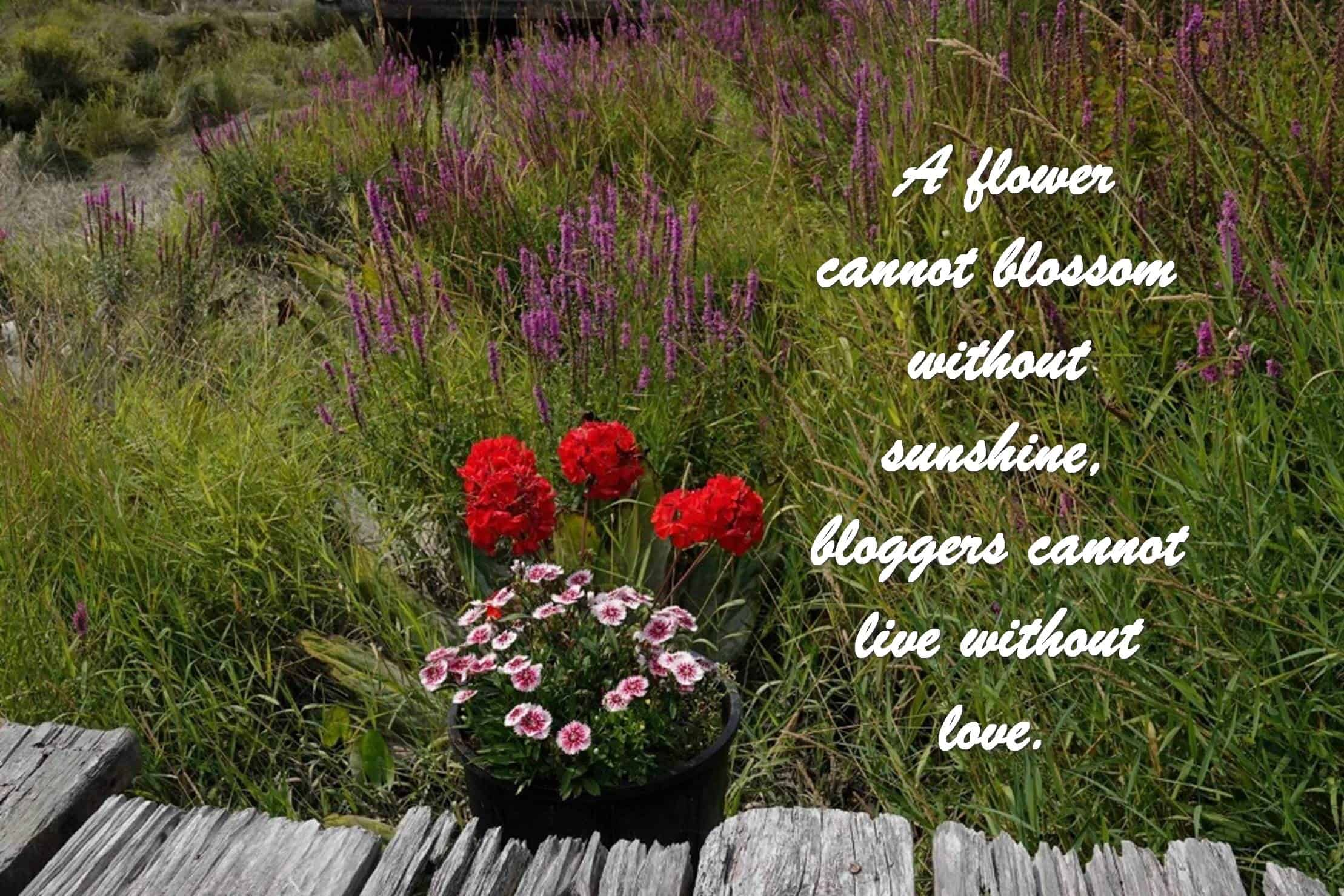 A flower cannot blossom without sunshine, bloggers cannot live without love.