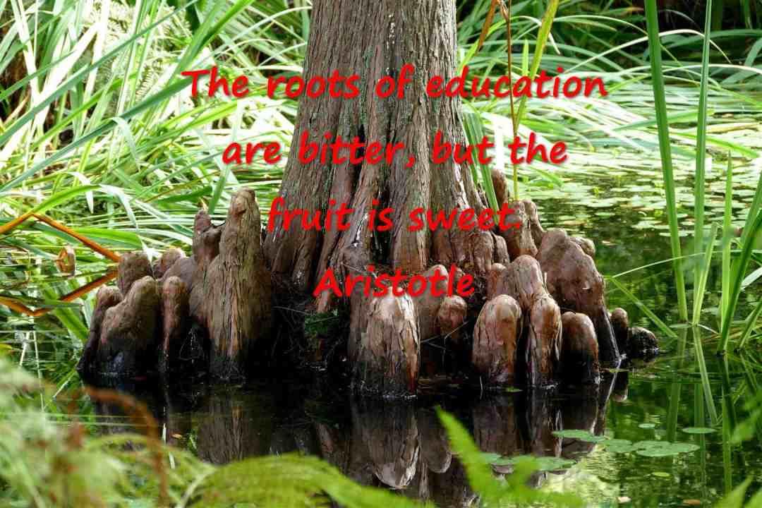 #SeniorSalon    @EsmeSalon    @SundayMeetGreet    The roots of #education are #bitter,  but the #fruit is #sweet. Aristotle