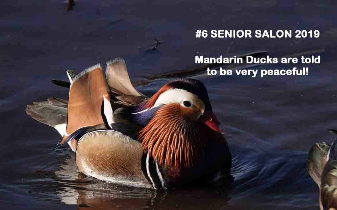 SENIOR SALON 2019 ROUNDUP: Feb 11-15, 2019