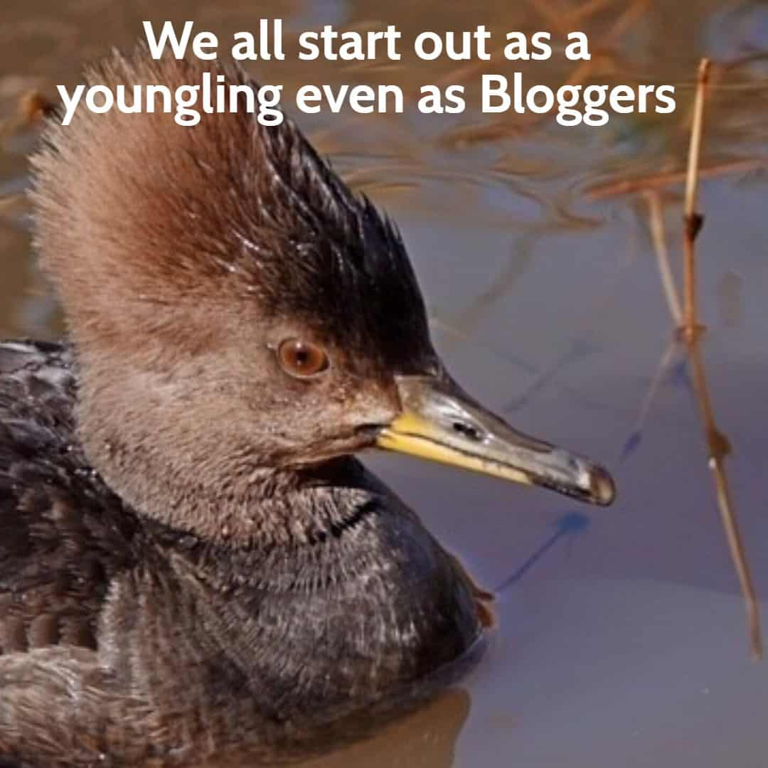 #10 SENIOR SALON 2019 We all start out as a youngling even as Bloggers