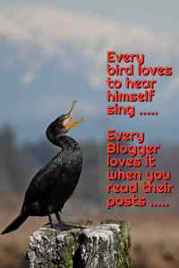 A cormorant on a wooden block singing