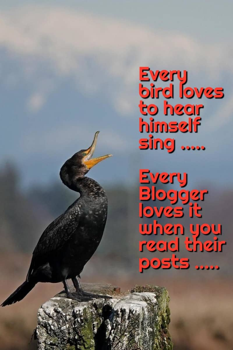 #9 SENIOR SALON 2019 . . Every bird loves to hear himself sing ..... Every Blogger loves it when you read their posts ...... . #bloggingevent #BloggingwithPassion #bloggingboosters #bloggingbrilliance