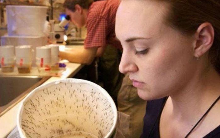 Soltarán millones de mosquitos en Ponce