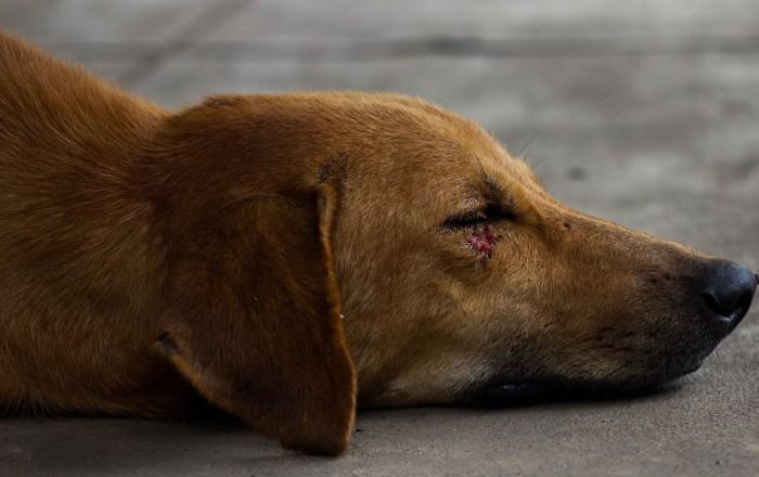 Mató un perro con rifle de perdigones