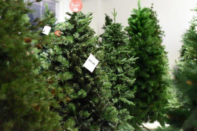 Acopio de árboles naturales de Navidad