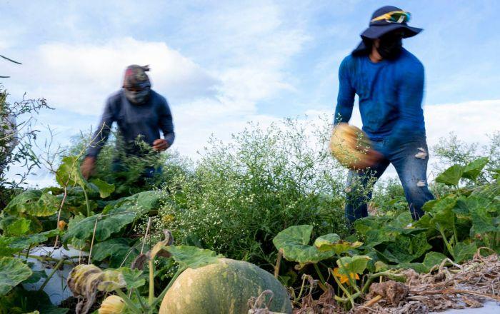 Anuncian incentivos para el sector agrario