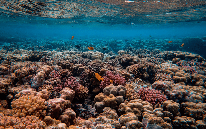 Senador presenta resolución para rescatar arrecifes de coral