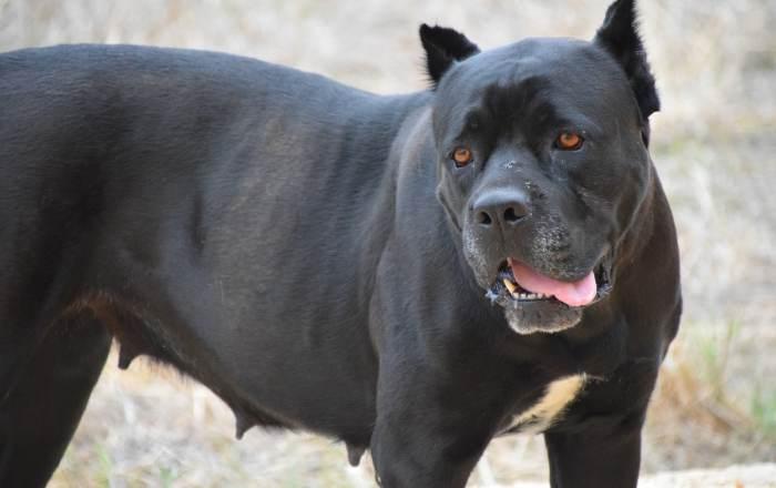 Matan perro lanzándole sustancia química encima