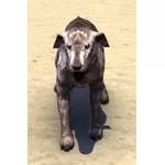 Windhelm Wolfhound