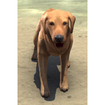 Bravil Retriever