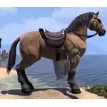 Bay Dun Horse
