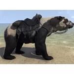 Masked Bear