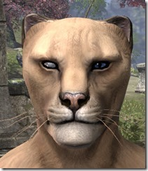 Blind Right Eye Khajiit Male