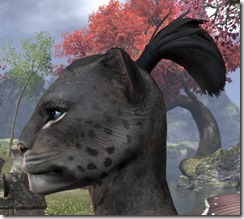 Geyser Ponytail 2