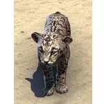 Clouded Senche-Leopard Cub