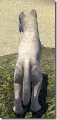 White River Ice Wolf Pup Back