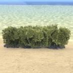Hedge, Green Short
