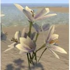 Pale Garden Flowers