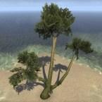 Tree, Forked Sturdy