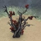 Tree, Gnarled Ashflower