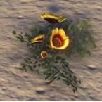 Flowers, Golden Prairie