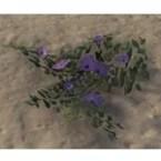 Flowers, Violet Prairie