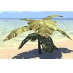 Plant, Squat Jungle Leaf