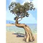 Tree, Ancient Juniper