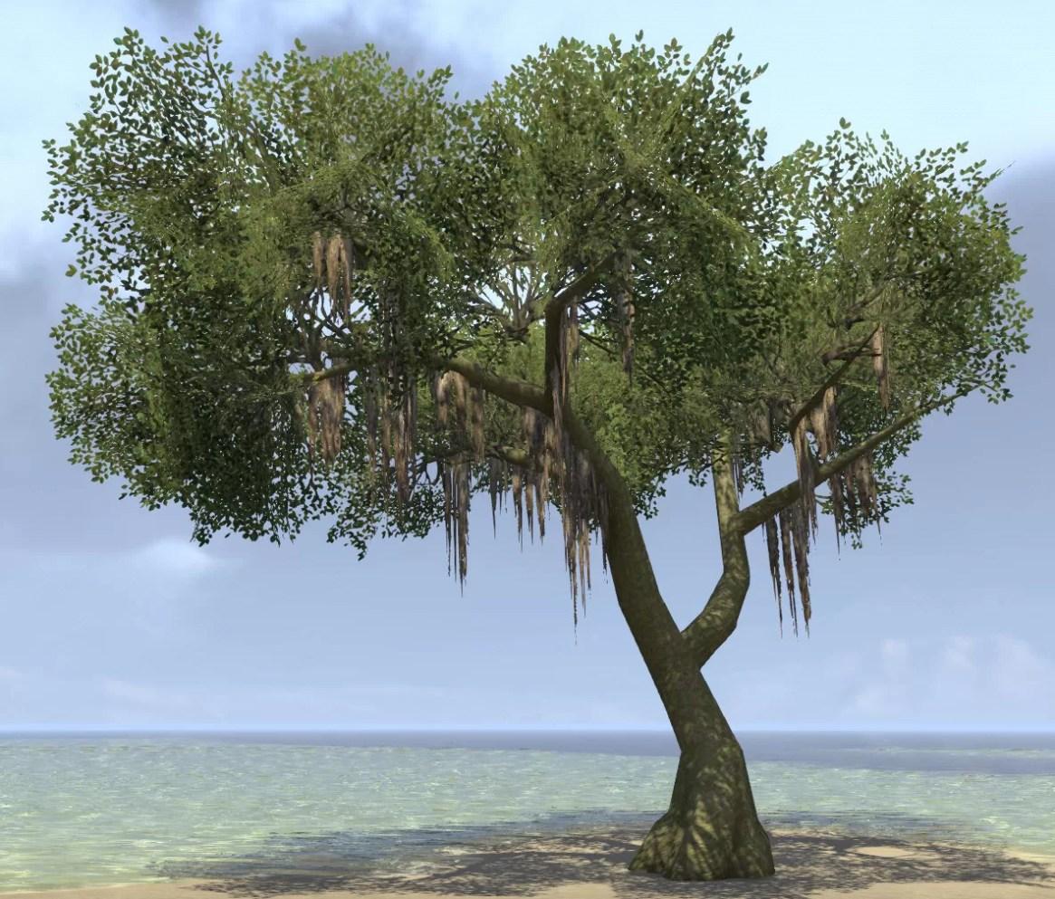 Fashion Forest Beauty Salon: Tree, Mossy Forest (Elder Scrolls Online