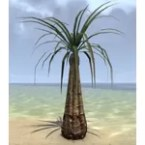 Tree, Water Palm