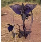 Bat Bloom