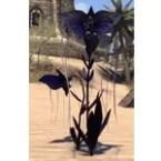 Flowers, Double Purple Bat Bloom