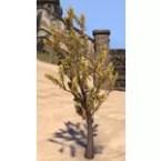 Plant, Bitter Stalk