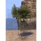 Plant, Hefty Elkhorn