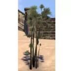Plants, Ash Frond