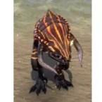 Hearthfire Hatchling