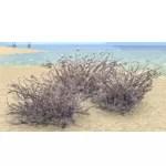 Bush Cluster, Snowswept