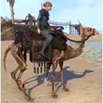Skeletal Camel