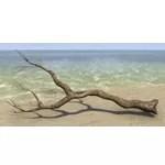 Branch, Forked Laurel