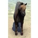 Dire Pony