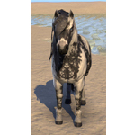 Shadowghost Pony