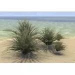 Bushes, Swordgrass Cluster